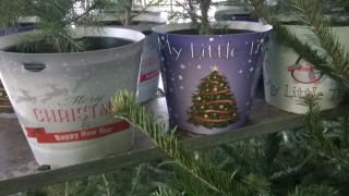 my little trees on sale